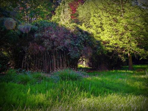 Passage aux bambous.