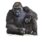 PNG képek:Állatok /vadon élő/