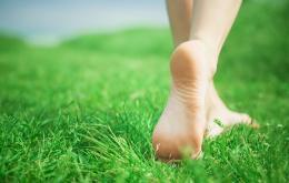 Soyez attentifs lorsque vous sortez pieds nus, de manière à éviter les piqûres d'abeilles ou de guêpes.