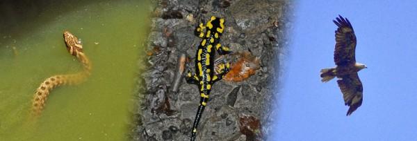 0125_biodiversite.jpg