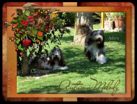♥ Bonne semaine d' Athos & Cheyenne ♥