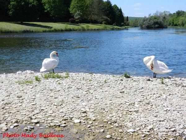 Une bien jolie petite famille au lac Parisot de Recey sur Ource...