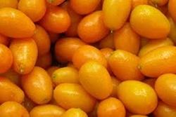 Le kumquat (2)
