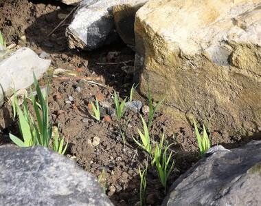 Le jardin en cours d'aménagement: de belles promesses!