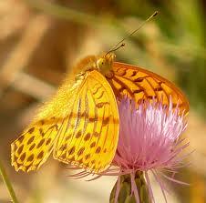 TAT- Procedure d'urgence et l'étreinte du Papillon