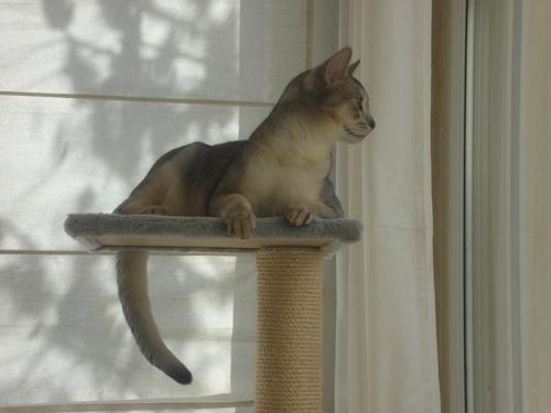 Série arbre à chats :