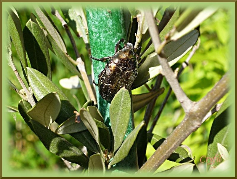 Quelques insectes au jardin