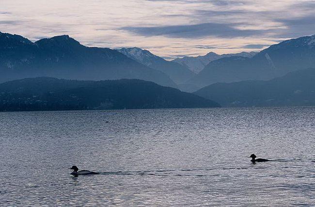 Bonjour....   le Lac d'Annecy