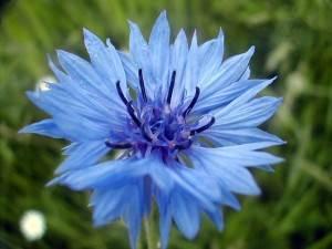 Coucou du haïku : Fleurs