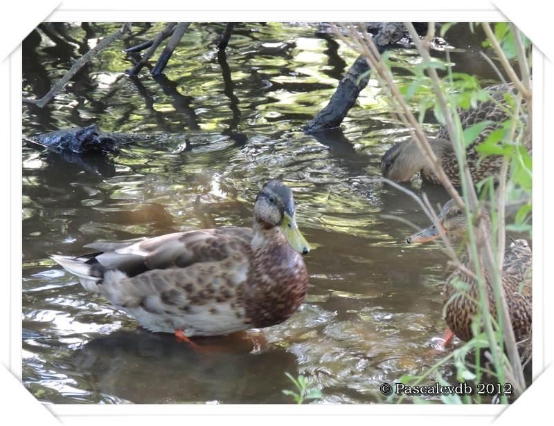 Visite aux oiseaux du teich - 11/12