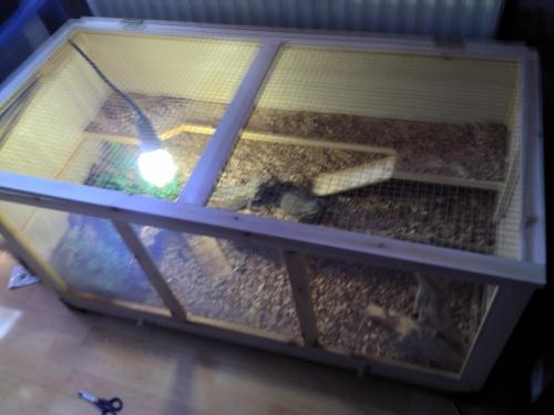 mon terrarium fait maison