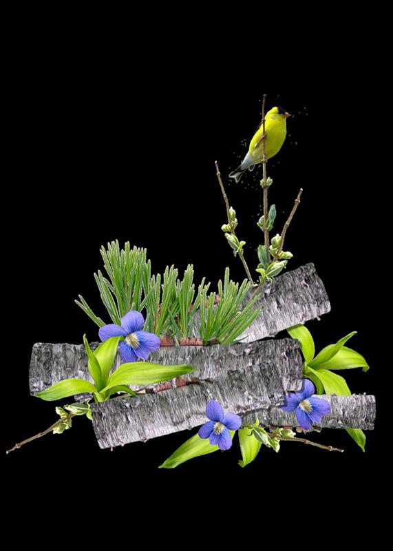 Barre-sep.-buches-fleurs-feuillage-oiseau-jaune-.0_1.png