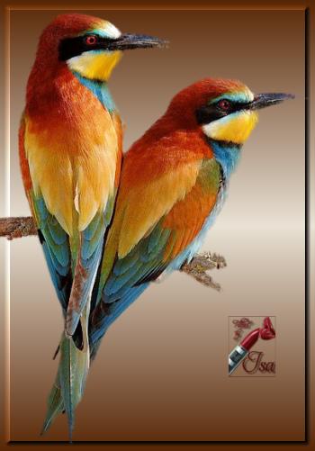 AN0053 - Tube oiseaux