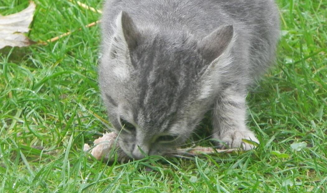 un petit minou dans le jardin