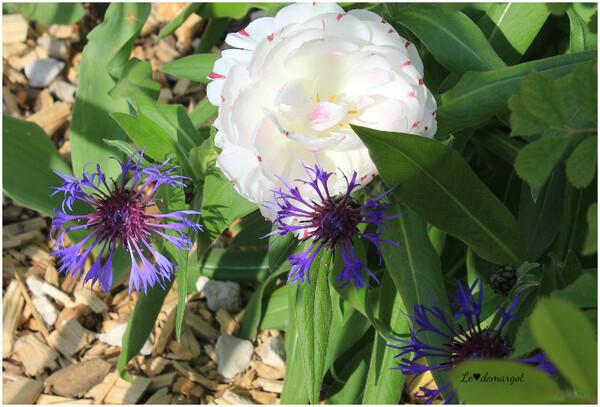Le jardin St Louis à Loches