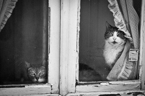 03 - Des chats à la fenêtre, encore