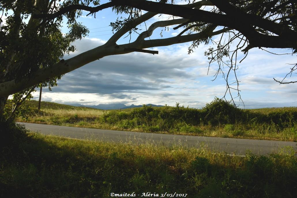 Quelques vues d'Aléria - Corse