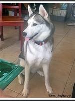 Louna (2 ans)