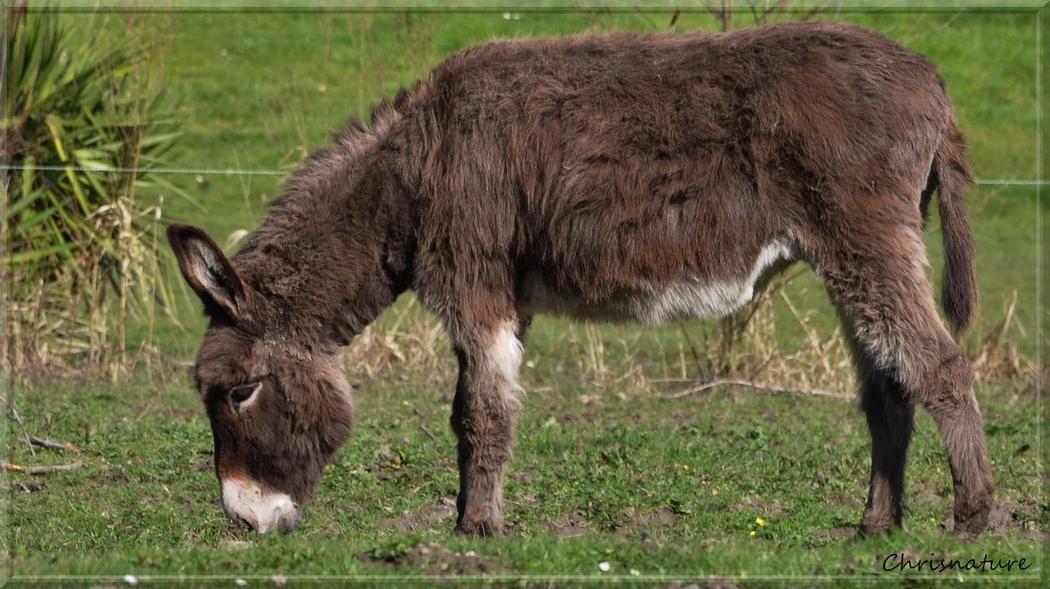 Un âne tout mimi