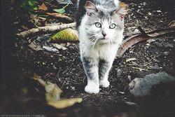 Ormekur til kat