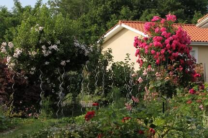 rosier liane rose pâle 'Dentelle de Malines' de Lens