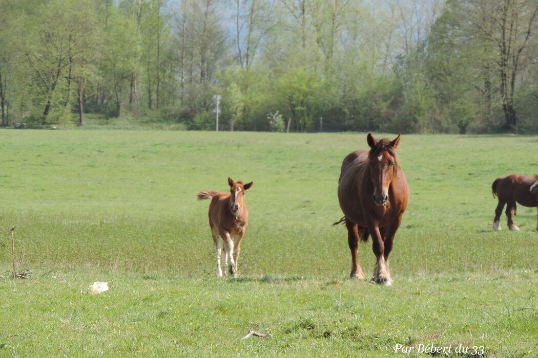Des chevaux en familles