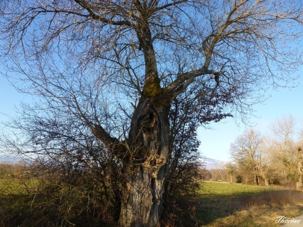 Troncs d'arbres (8)