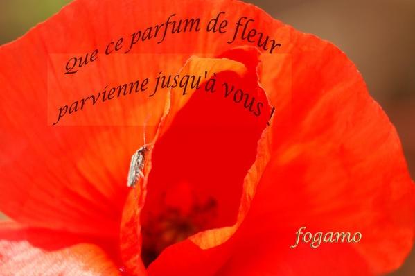 fleur-parfum--e-modifi---1.jpg