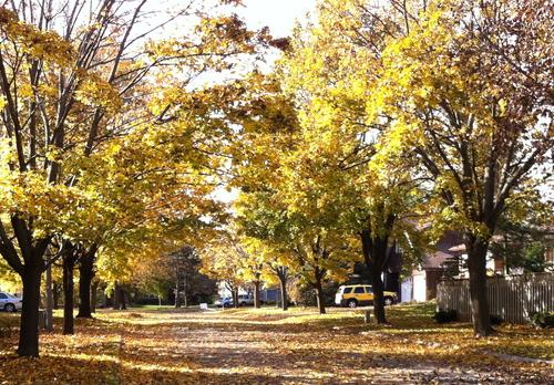 Emblématique feuille d'automne...