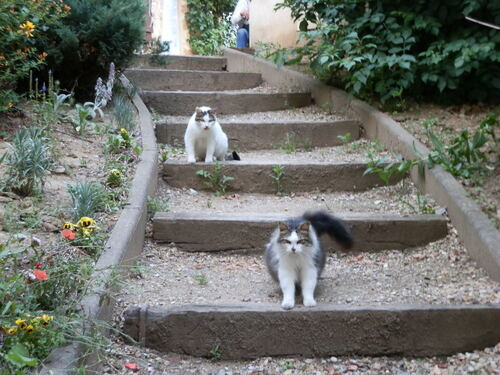 Les bienfaits thérapeutiques du chat