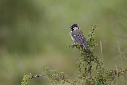 Inventaire ornithologique Crozon Finistère Juillet 2017