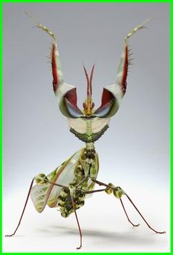 Insectes Rares et étonnants