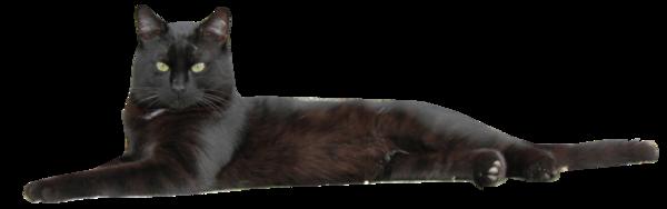 Tubes chat noir