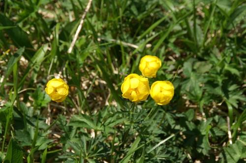 Fleurs de juin aux Gloriettes