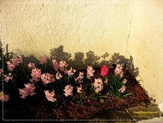 Fleurs-printemps-2011 0812
