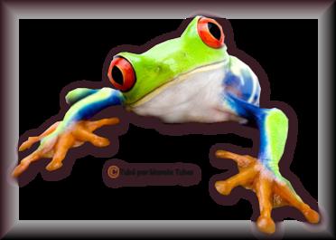 Tube grenouilles / Crapauds 2955