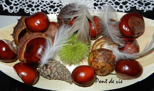CHATAINES ET MARRONS