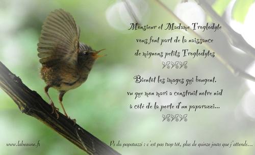 Les oiseaux observés par  Christian Labeaune...