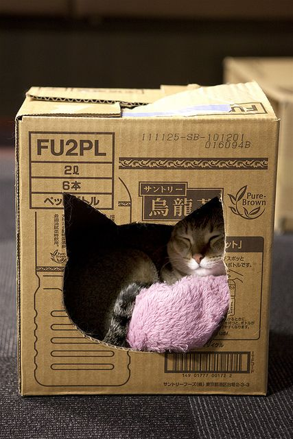 a cat in a cat box...love this,,, would be cute painted.