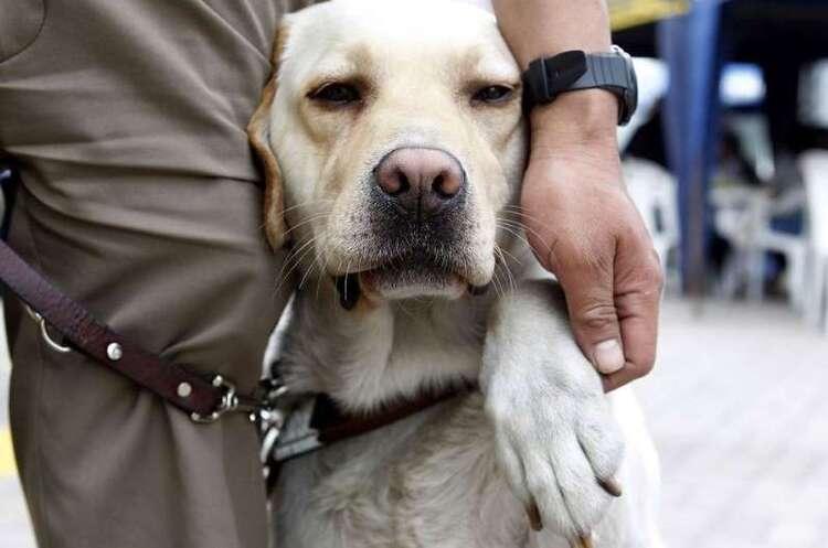 Marseille : un aveugle expulsé d'un supermarché avec son chien guide
