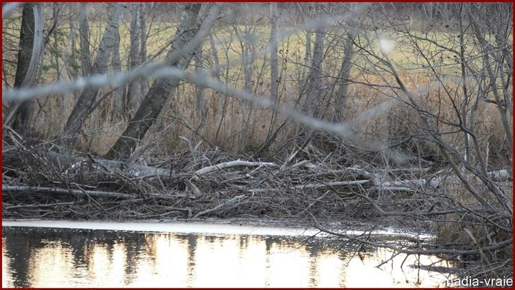 pret Une après-midi en forêt. (4 de 5)