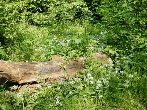 Balade verdure au jardin Massart