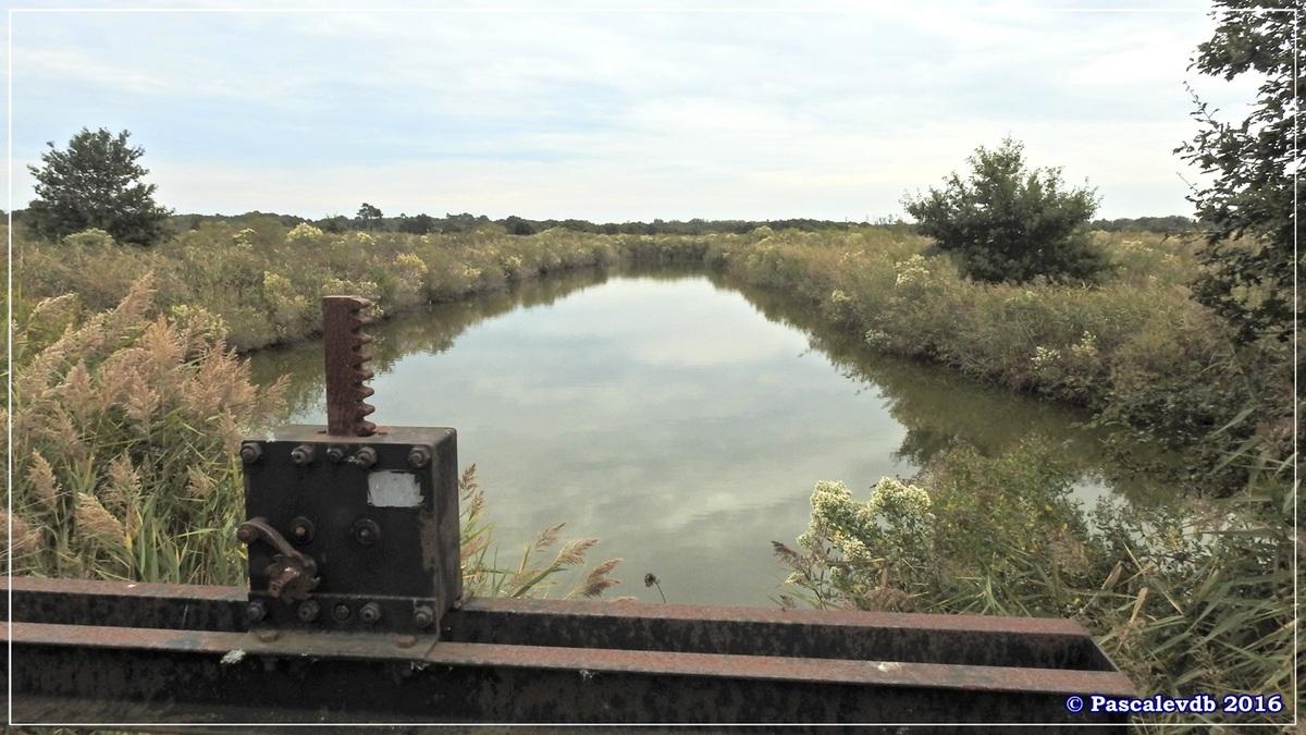 Plaines du Teich et domaine de Fleury - Octobre 2016 - 7/13