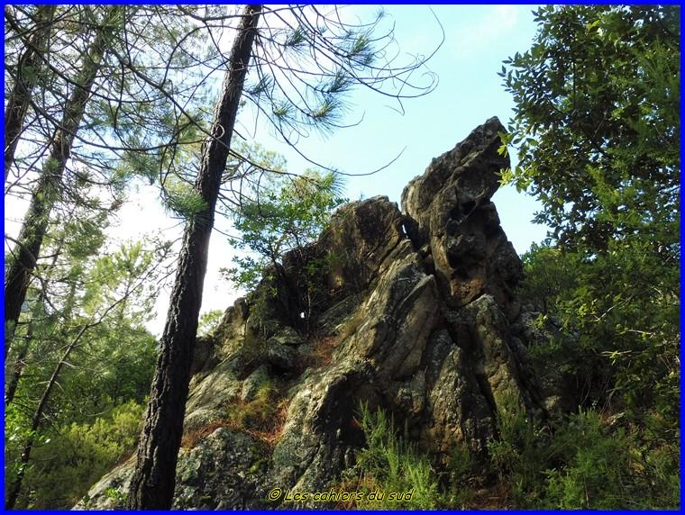 Corse, forêt de Bonifatù, la boucle de Finocchi