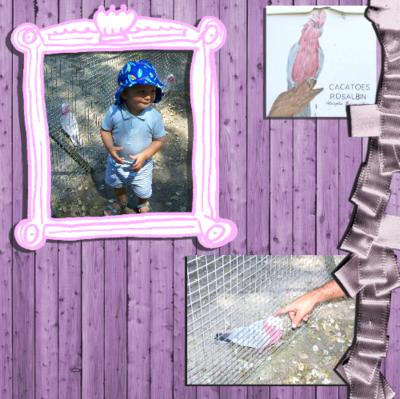 Blog de chipiron :Un chipiron dans les Landes, Les oiseaux