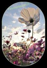 Les  fleurs  dans  notre  vie  quotidienne