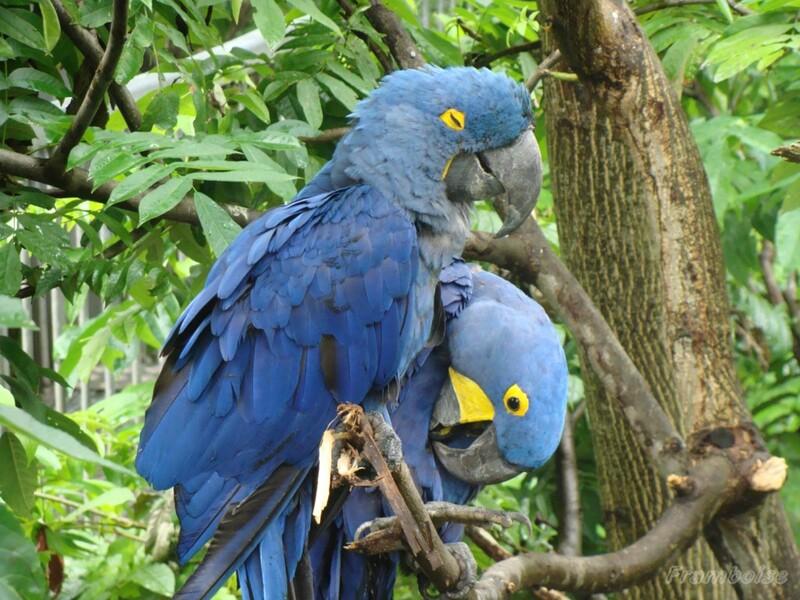 Parc aux Oiseaux de Villars les Dombes