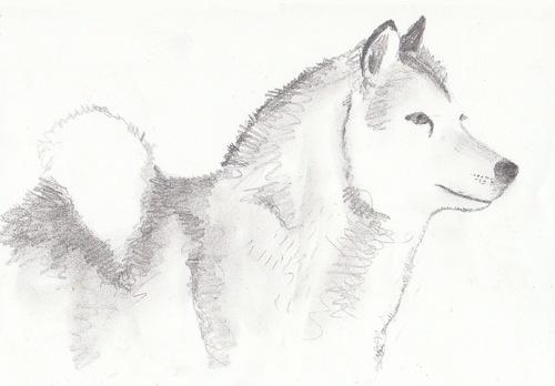 - Reconnaissance manifestée par un chien -