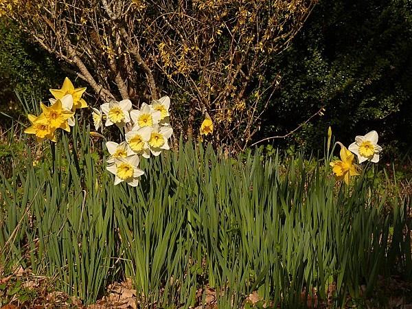 Narcisses scene