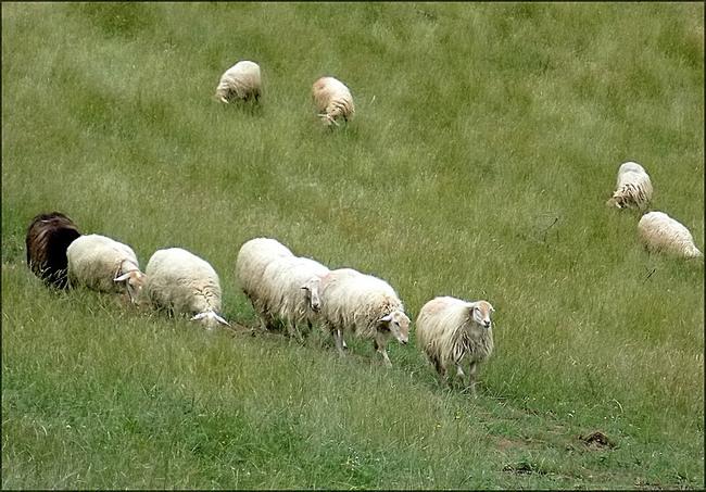 Au milieu des herbes hautes
